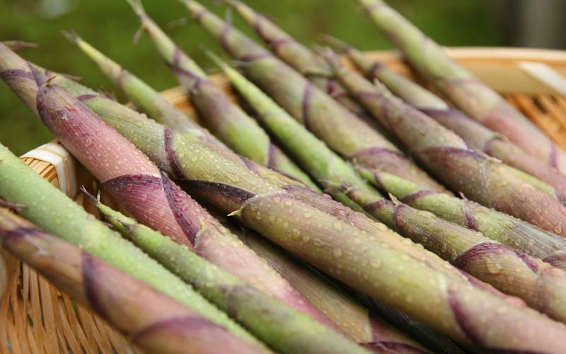 野沢温泉は山菜の宝庫。ふきのとう、たらの芽、根曲がり竹、など旬の味覚を楽しめます。